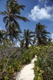 Идя путь от белого песка между пальмами Стоковая Фотография