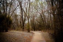 Идя путь с деревьями совсем вокруг на яркий солнечный день Стоковое фото RF
