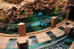 Идя путь, с садком для рыбы Poema Del Mar, аквариум, Las Palma Стоковая Фотография RF