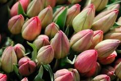 идя рынок к тюльпанам Стоковые Изображения