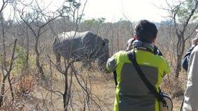 Идя сафари с белым носорогом Зимбабве вышесказанного сток-видео