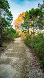 Идя следы в тихом, спокойном, мирном Forest Park с живыми зелеными деревьями и растительностью стоковые фотографии rf