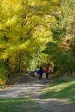 Идя след в красочном лесе листьев осени Стоковые Изображения RF