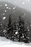 идя снег зима Стоковое Фото
