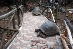 Идя черепахи стоковые изображения
