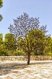 Иерусалим Израиль 14-ое сентября 2017 Сад музея холокоста Взгляд скульптуры вызванной, для дерево человека поля, m Стоковые Изображения