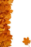 дизайн кленового листа Стоковое Фото