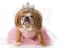 избалованная собака Стоковое Изображение