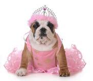 избалованная собака Стоковые Фото