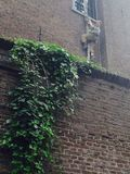 Избегать вниз с стены Стоковая Фотография RF