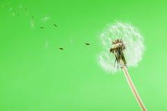 Избегать семена стоковое фото