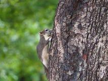 Избежание белки младенца к дереву стоковое фото rf