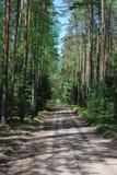 Избежание в древесинах Стоковые Фото