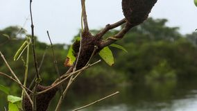 Избежание колонии муравья от потока на дереве стоковые фото