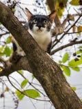 Избежание котенка другой кот вверх по дереву стоковые фото