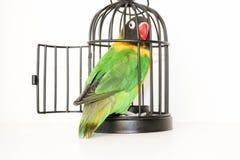 Избежание Попугай в клетке с открыть дверью стоковое фото