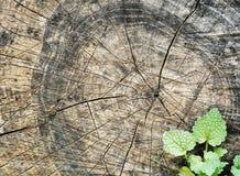 Избежание роста молодое от валить дерева стоковые фото