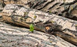 Избежание роста молодое от валить дерева стоковые изображения rf
