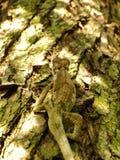 Избежание хамелеона стоковое изображение
