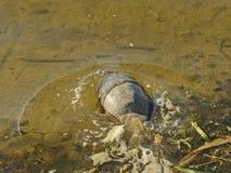 Избежание черепахи Стоковые Фото