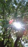 Избежания Солнця Стоковые Изображения