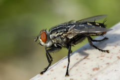 изверг мухы стоковое фото