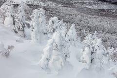 Изверг снега или снег заморозили деревья на держателе Hakkoda Стоковое Изображение RF