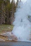 Извержение гейзера берега реки в национальном парке Йеллоустона, США Стоковые Фотографии RF