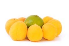 известка абрикосов стоковые изображения