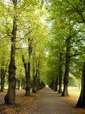известка бульвара зеленая Стоковое Изображение RF