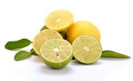 известка лимона Стоковое Изображение