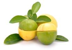 известка лимона Стоковое Изображение RF