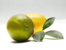 известка лимона Стоковое фото RF