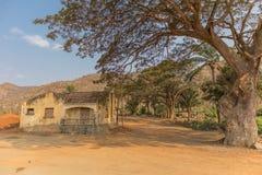 Известное дерево Африки bantu anisette С африканской деревней Стоковые Фото