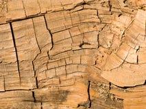 Известные большие деревья секвойи стоя в национальном парке секвойи Стоковая Фотография