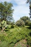 Известные и majestuous мексиканские археологические раскопки Стоковая Фотография RF