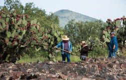 Известные и majestuous мексиканские археологические раскопки Стоковые Изображения