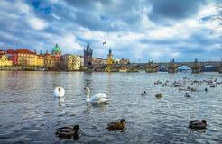 Известные Карлов мост и башня, Прага, чехия Стоковая Фотография