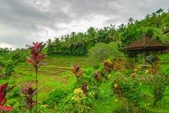 Известные террасы галерей Бали во время сезона дождей Стоковое фото RF