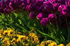 Известные тюльпаны Стамбула стоковые фото