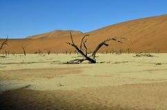 Известный окаменелый лес мертвого viel Стоковые Изображения