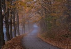 Извилистая дорога в осени в Woodstock Вермонте стоковая фотография rf