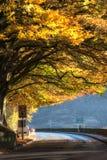 Извилистая дорога до дерево Великобритания осени стоковое изображение