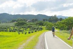 Извилистая дорога над зеленым холмом Стоковые Фотографии RF