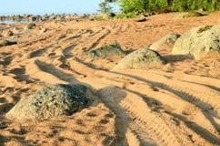 Извилистая дорога между 2 деревьями Стоковые Фотографии RF