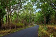 Извилистые дороги в лесе Стоковое Изображение RF