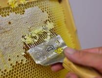 Извлекать мед, старомодный путь Стоковое Изображение