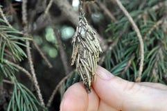 Извлекающ Bagworm вручную Стоковое Фото