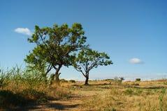 Изгибает деревья на предпосылке голубого неба стоковые фото