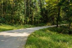 Изгибать дорогу горных склонов в тенистых древесинах на солнечный день стоковые фотографии rf
